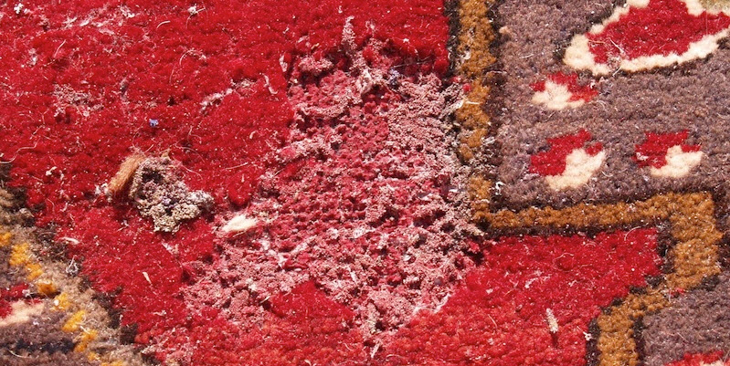 Moth Damage in Oriental Rug